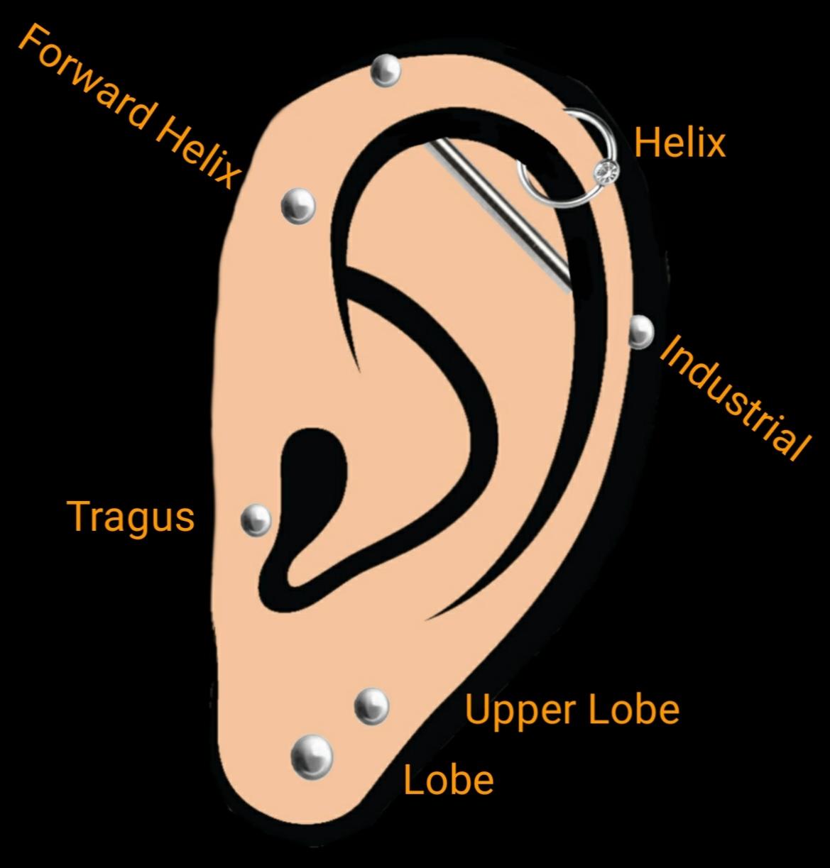 Piercingarten am Ohr. So werden Helix,Tragus, Lobe und Industrial gestochen